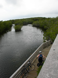 Mangrove trail from the observation tower