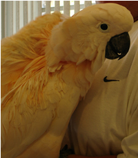 Paco gets tickled under his wing